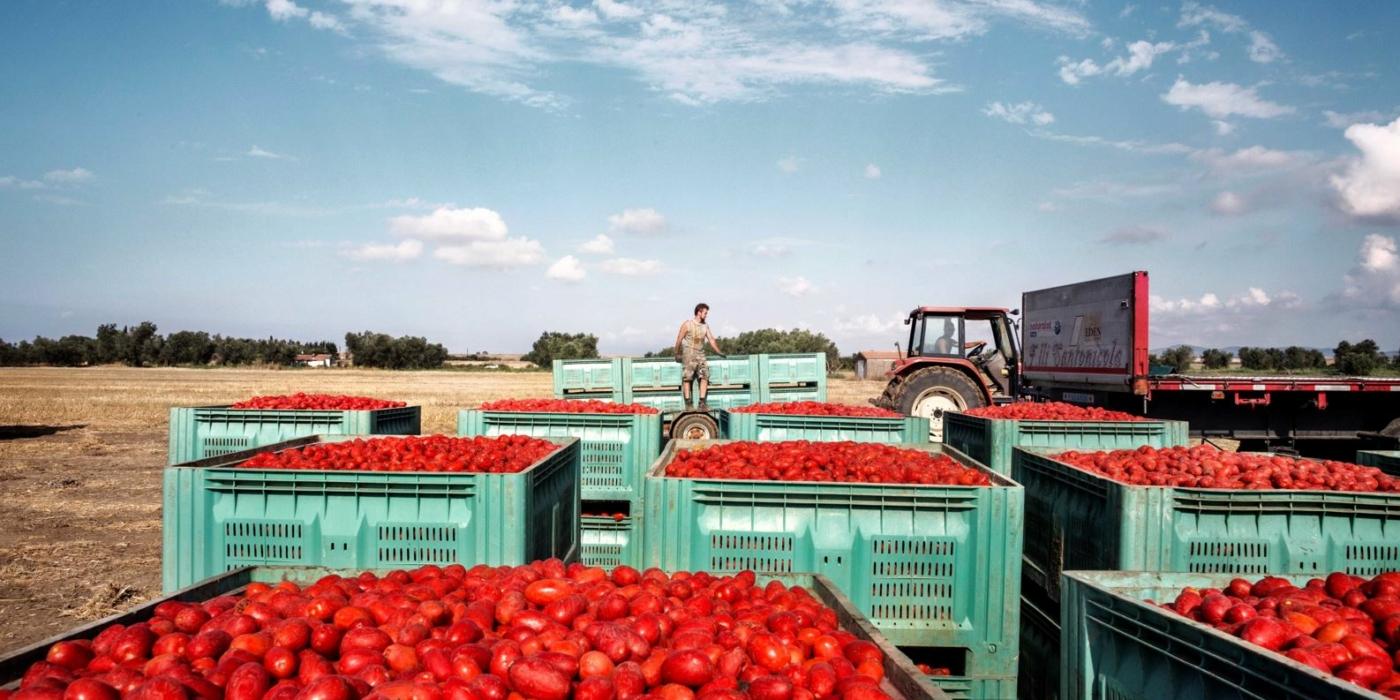 Italian Tinned Tomatoes: How the Magic Happens